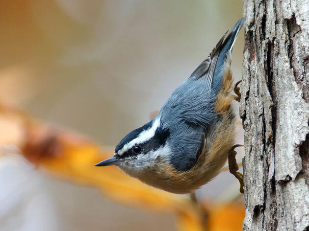 Audubon Invites You to Celebrate 120 Years of the Annual Christmas Bird Count
