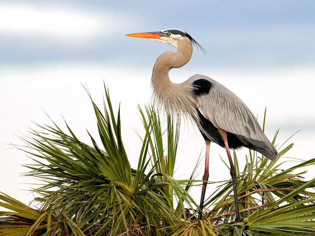 New Water Rule Endangers Millions of Birds and America's Water Supply