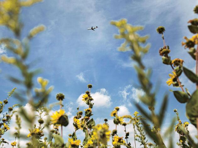 En una parte de las Praderas de Ohio, la aviación y la conservación colisionan