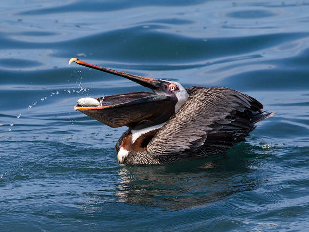 Great News for Atlantic Seabirds