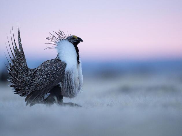 Audubon Breaks Down New Senate Funding Bill Impacts