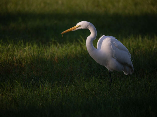Public Comment Period on Gutting of 100-Year-Old Bird Protection Law Ends