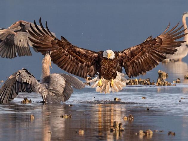 Ganadores de los Premios de Fotografía Audubon 2016