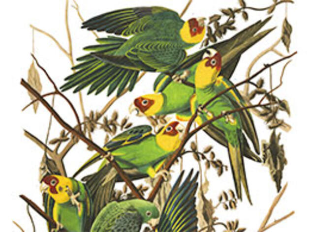 We Now Know the Real Range of the Extinct Carolina Parakeet