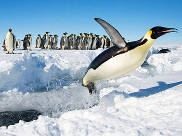 10 razones genial para celebrar a los pingüinos