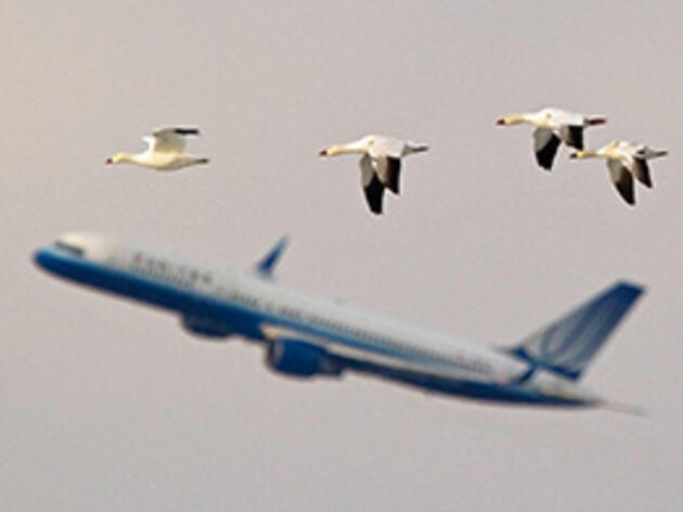 Volunteers Are Keeping Track of Airport Arrivals of the Bird Kind