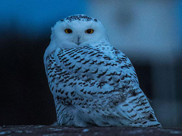Birdist Rule #29: Try Birding After Dark