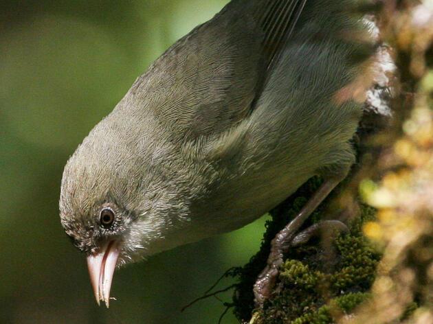 Endangered Hawaiian Bird Immortalized In Space