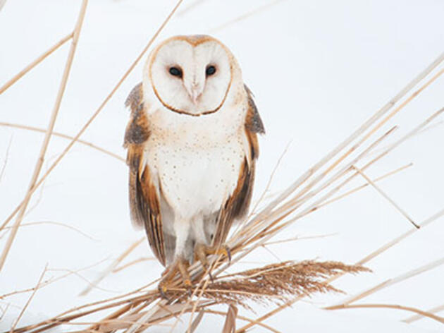 Is Flash Photography Safe for Owls?