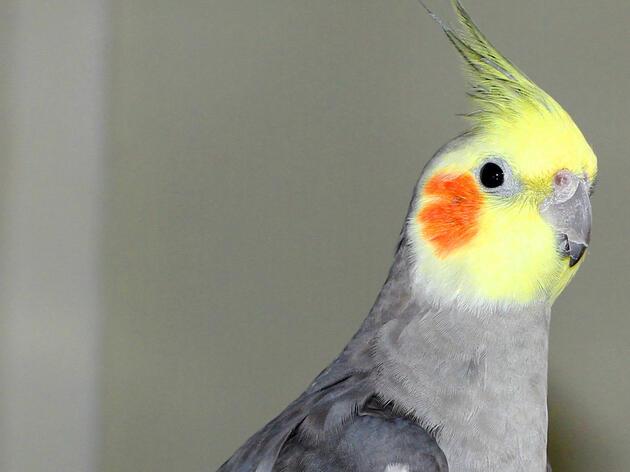Why Do Birds Masturbate?
