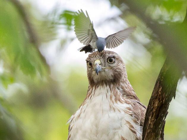 12 Fascinating Bird Behaviors From the 2018 Audubon Photography Awards