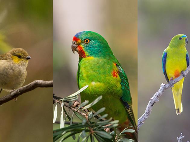 Crowd-Funding To Keep Three Birds' Extinction at Bay