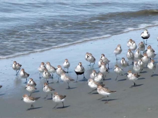 Aves Playeras 101: Qué buscar cuando llegas al agua