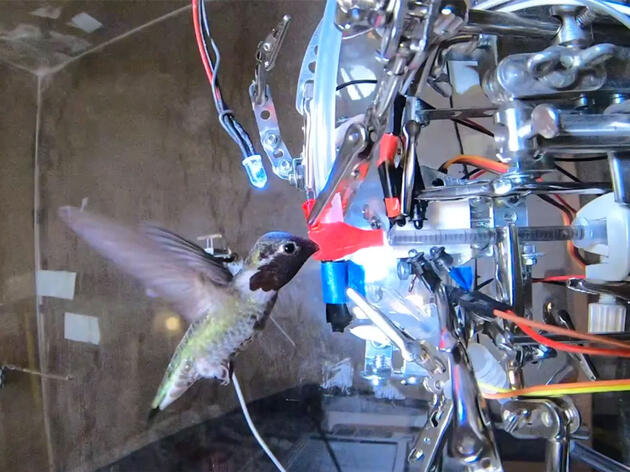 Watch How Hummingbird Hackers Keep Up With Their Quick, Tiny Subjects