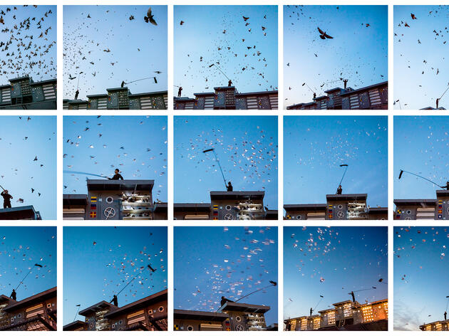 An Avian Ballet of 2,000 Illuminated Pigeons Streaks the New York City Sky