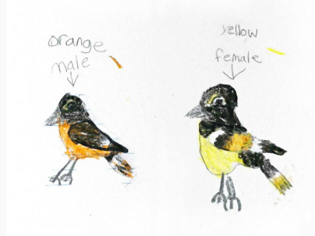 Kids Welcome Birds Back With Precious Postcards