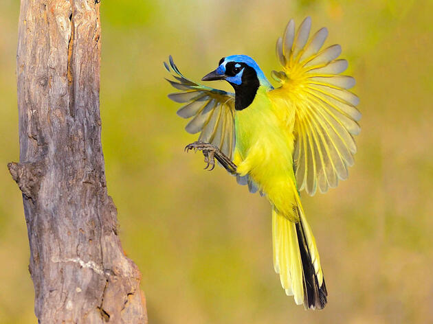 6 Other Birds (Beyond the Bunting) That Make People Go Nuts