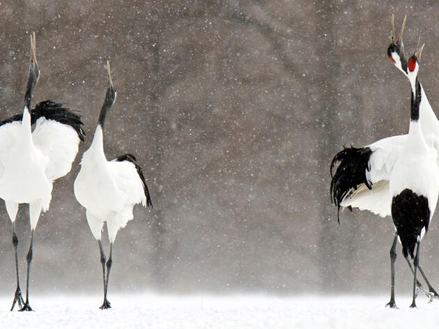 What Birds Tell Us About Climate Change's Threats