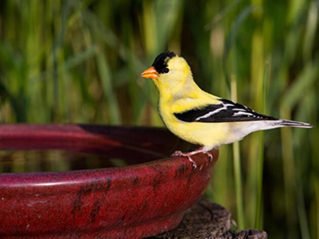 How to Make a Birdbath