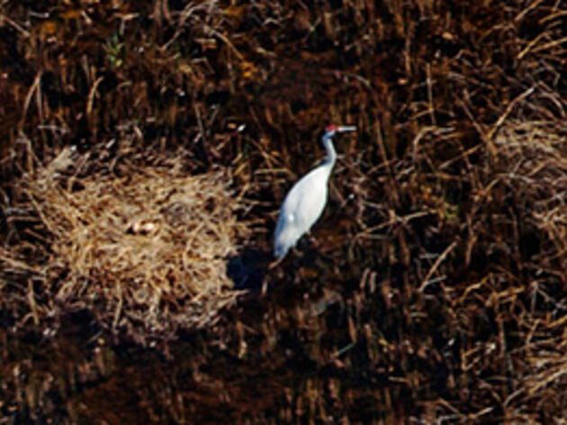 A Bird's Eye View of Whooping Cranes' Isolated Wetlands