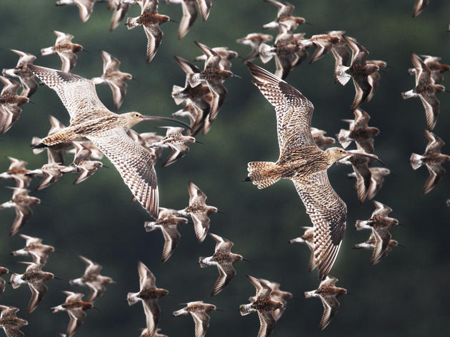 How to Protect the Birds That Fly the Farthest