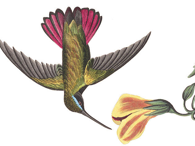 What Mr. Audubon Thought of Hummingbirds