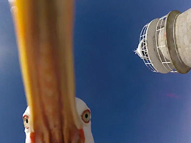 Birds Are Taking Over the World, One GoPro at a Time