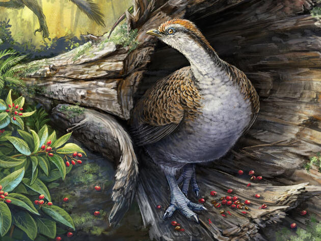 How Did Bird Ancestors Survive the Apocalypse?