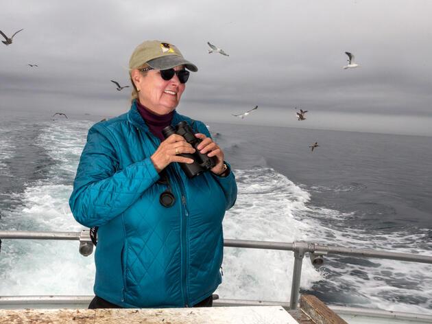 Las aves salvaron a Debi Shearwater. ¿Realmente se va a retirar?