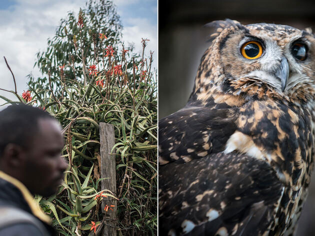 A Mysterious Illegal Egg Trade Imperils Kenya's Owls