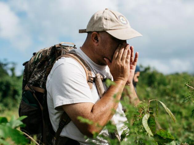 Puertorriqueños trabajan unidos para contar aves después del paso del huracán María