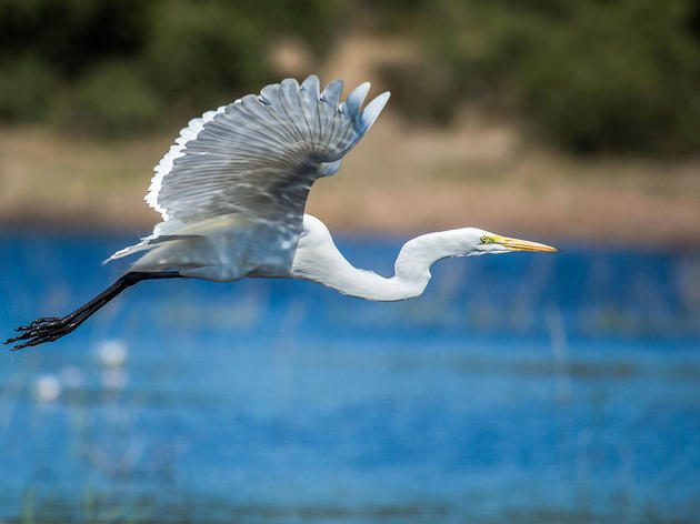 Audubon Commends House Action on Water Resources Bill