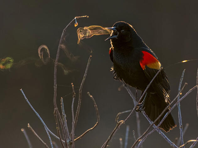 2019 Audubon Photography Awards Marks 10th Year of Exquisite Bird Photography