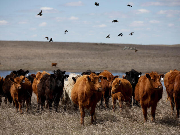 Grazing Like It's 1799: How Ranchers Can Bring Back Grassland Birds