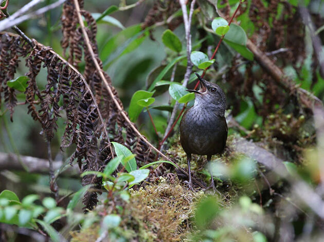 10 New Birds Described in Biggest Avian Discovery in More Than a Century
