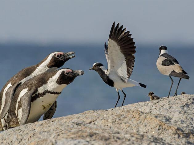 12 Fascinating Bird Behaviors From the 2019 Audubon Photography Awards