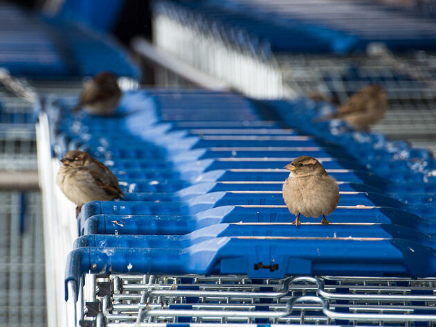 What Happens When Birds Invade Stores?