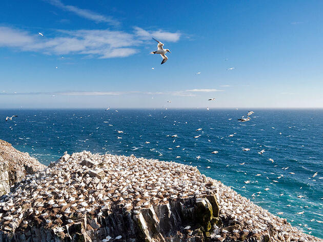 The Best Places to See Seabirds Without Getting Seasick