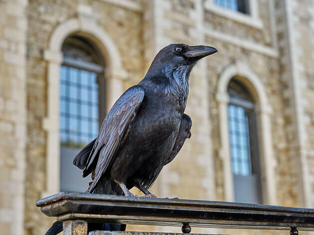 On the Job With the Tower of London's Ravenmaster