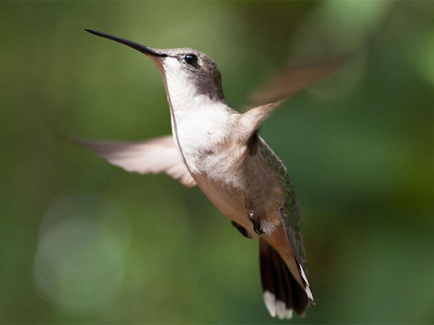 """Win a Copy of the Murder Mystery, """"A Shimmer of Hummingbirds"""""""