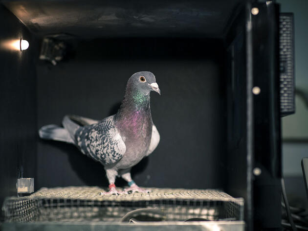 How a Common Street Bird Could Coach Doctors Against a Bad Diagnosis