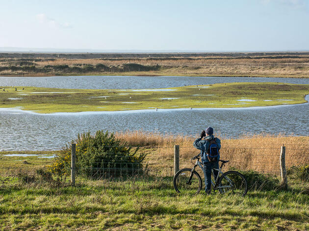 Birders Are Discovering a Secret to Better Big Days—the Bicycle