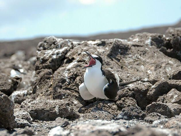 Sooty Tern Vomit Tells a Worrisome Story