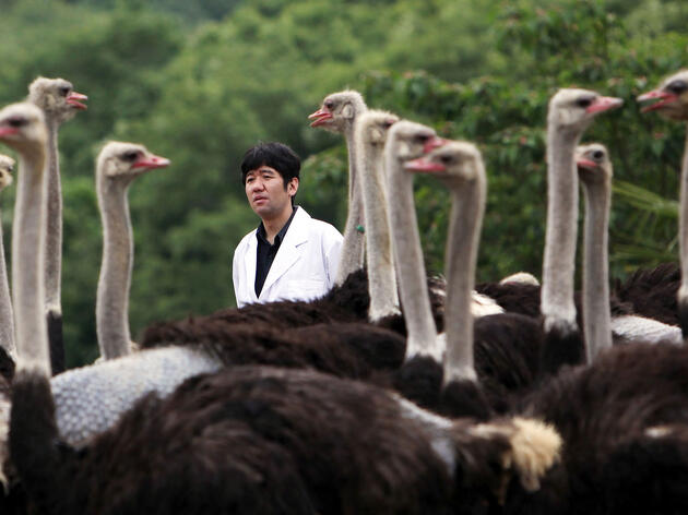 Yasuhiro Tsukamoto, professor at Kyoto Prefectural University in Japan, with his army of antibody-generating Ostriches. Tomohiro Ohsumi/Bloomberg/Getty Images