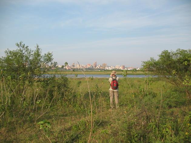Asunción Bay Important Bird Area, Paraguay mjeffery