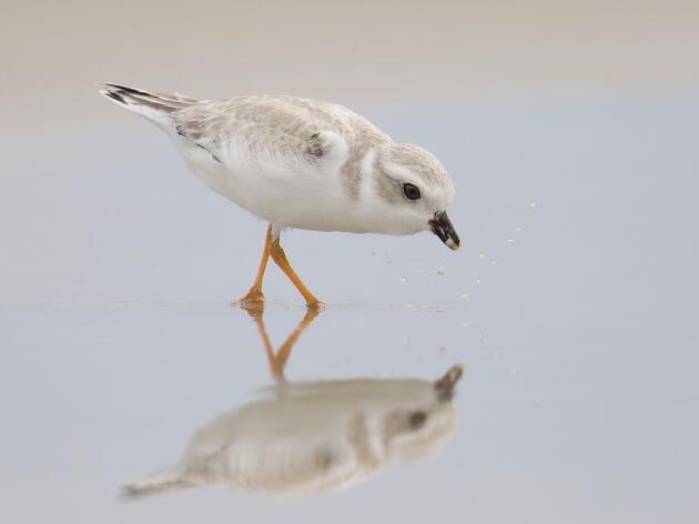 Audubon Great Lakes Celebrates Signing of Great Lakes Restoration Initiative Act