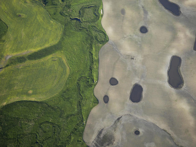 Northern Great Plains Grassland and Wetland Habitat Falls to the Plow