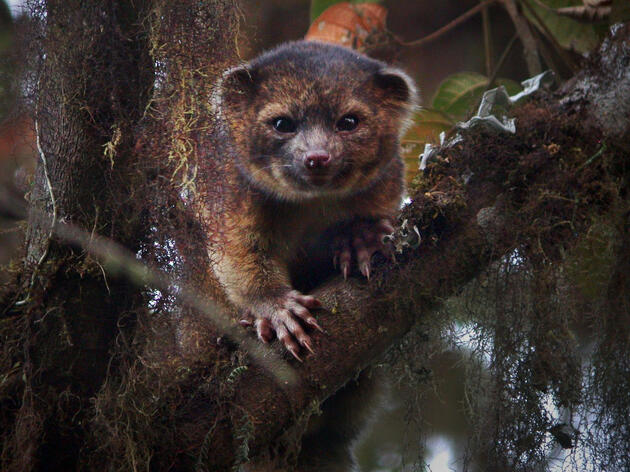 11 New Animal Discoveries