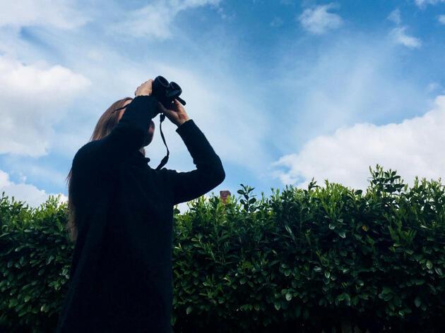 Kristen Olson watches a Bald Eagle in Portland, Oregon. Courtesy of Kristen Olson