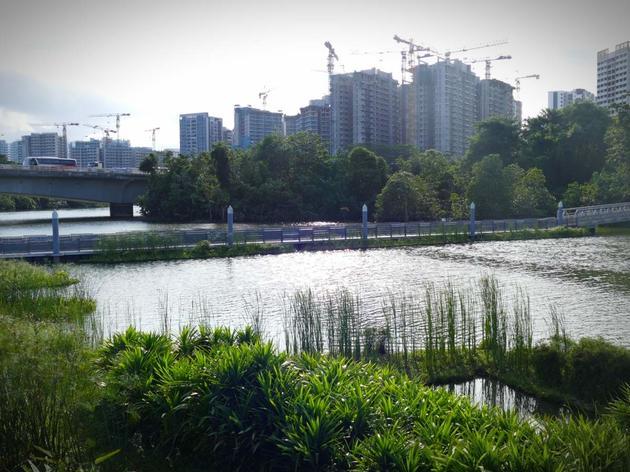 Day 361: Birding Singapore